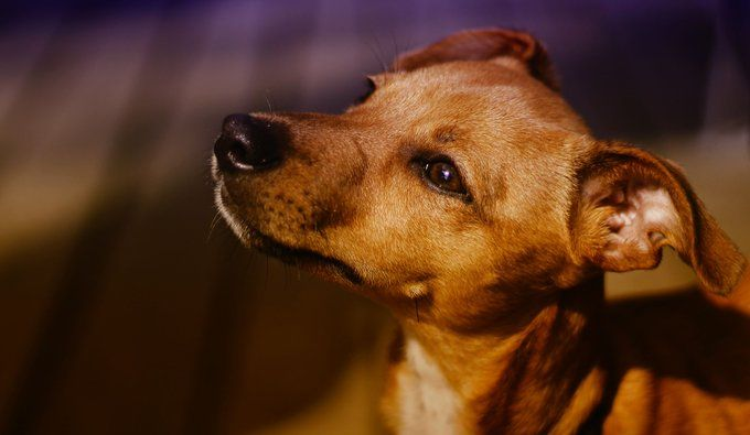 7 ペットくすりwebさん Petkusuriweb Twitter ペット くすり 犬