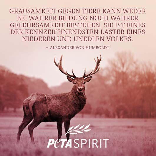 Peta Spirit Zitat Von Alexander Von Humboldt Geist Zitate
