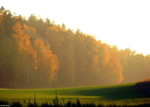 autumn trees sunset mist nature colors forest island october stockholm silhouettes gålö abigfave canons5is natureselegantshots saariysqualitypictures denesg1 thebestofmimamorsgroups fleursetpaysages flickr´sportal lélitedespaysagesfleuretpaysages