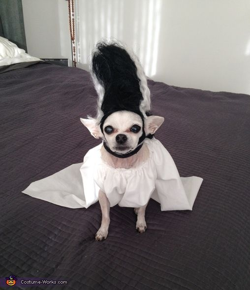 Bride of Frankenstein Dog Homemade Costume
