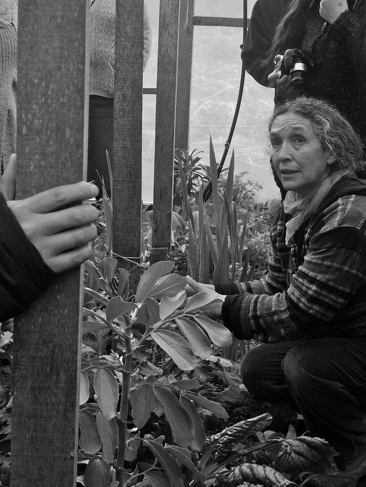 Ella es Blanca Rosa. Educadora, Ecologista, Permacultora y Guardadora de Semillas Nativas.  Tuvimos el gusto de conocerla, compartir con ella y recibir sus experiencias en el huerto.   ---- Foto: Revisión de plantas y almácigos en invernadero. © Claudia Mellado Ñancupil