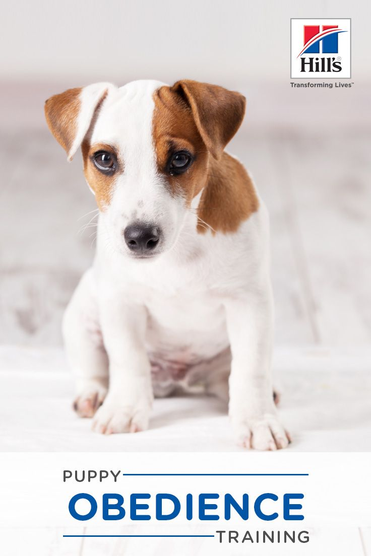 Puppy Training Obedience Training Tips And Advice Puppy