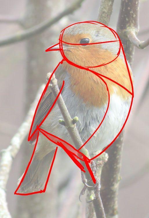 Wie zeichnet man einen Vogel?