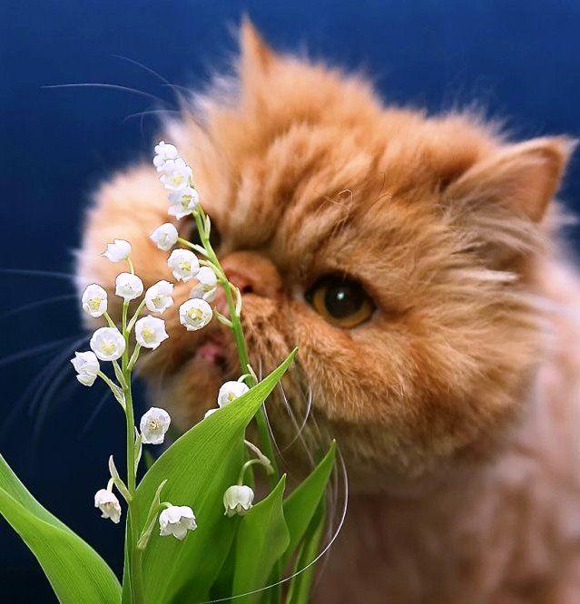 нашей картинки с весной тебя милый некоторых видов