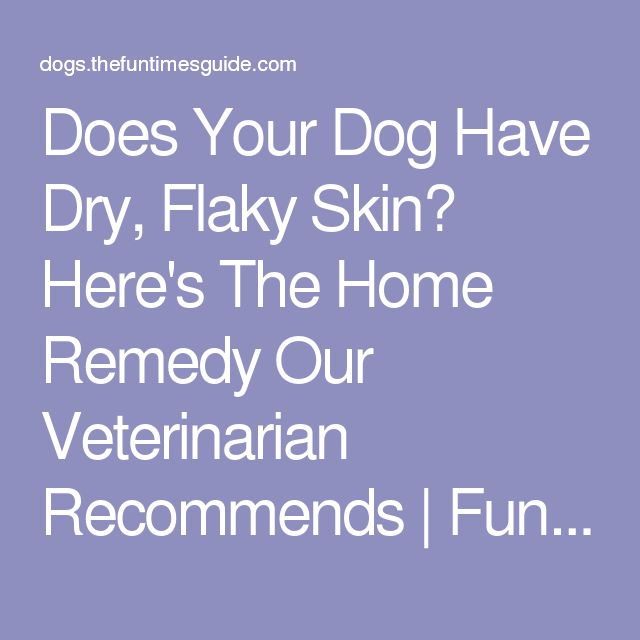 Does Your Dog Have Dry, Flaky Skin? Here's The Home Remedy Our Veterinarian Recommends | Fun Times Guide to Dogs