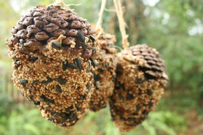 Pinecone Bird Feeders for St. Francis
