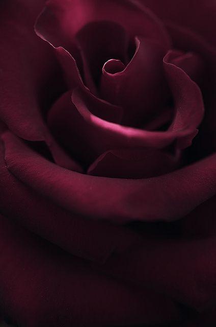 rose170513_002 | Flickr