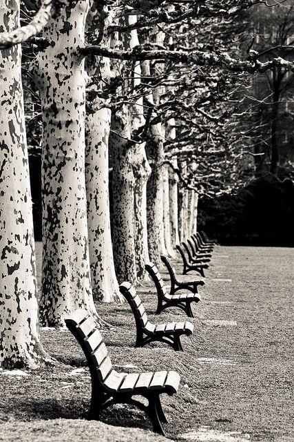 op deze foto is het ritme goed te zien. de bomen en de bankjes staan steeds op een gelijke afstand van elkaar af