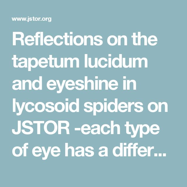Reflections on the tapetum lucidum and eyeshine in lycosoid spiders on JSTOR -each type of eye has a different purpose