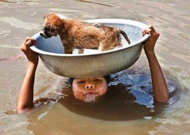 Voici des Photos de Personnes sauvant des Animaux, qui font chaud au coeur. Une Femme qui porte son Chien dans une rue inondée.