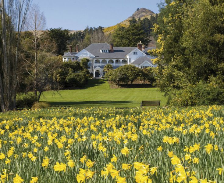 Its spring in New Zealand and the Daffodils are out at Otahuna Lodge! http://blog.luxuryadventures.co.nz/checking-in-with-hall-cannon-at-otahuna-lodge