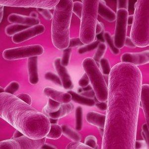 Bacillus subtilis: A Healthy Probiotic Strain