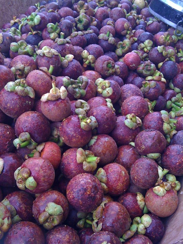 Mejores 50 im genes de frutas de latinoam rica en for Frutas ornamentales