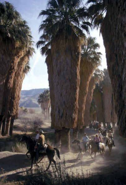 Palm Springs Riders : A group of riders among Washingtonia palms in Andreas Canyon, Palm Springs, southern California, January 1970 // Slim Aarons //