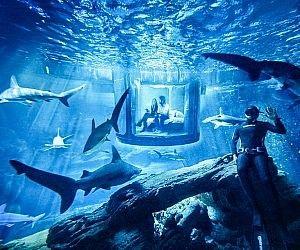 17 Best Ideas About Underwater Bedroom On Pinterest Sea