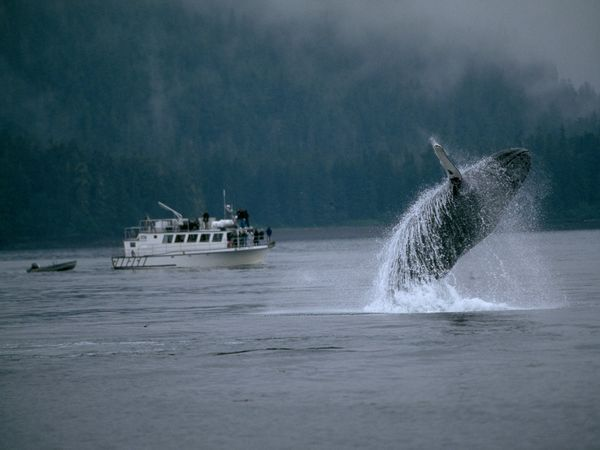 Go whale watching... was obsessed with Marine life as a kid and would love to see this in person.
