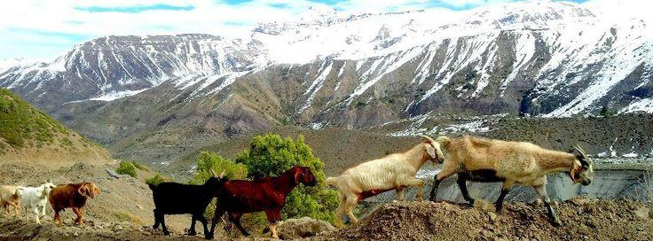 Camino El Volcán | San jose de Maipo |