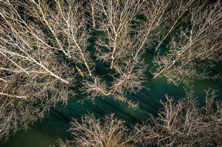 kayak, paddling between trees, aerial © Ruggero Arena