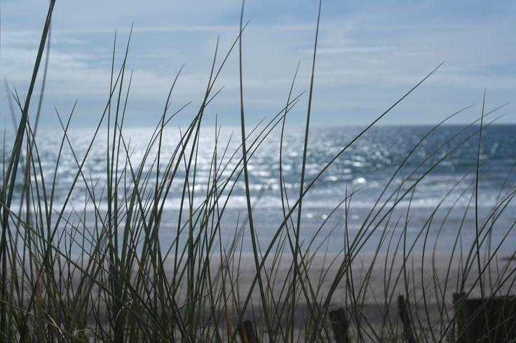 The ocean is the best~