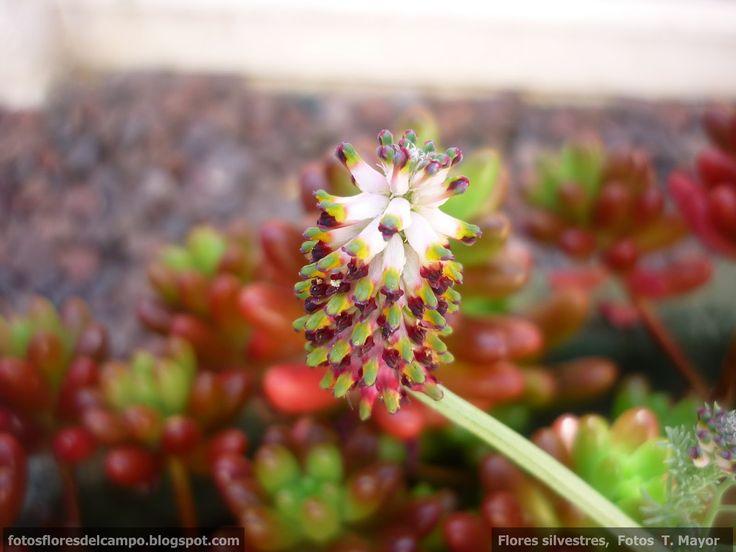 Ms de 25 ideas increbles sobre Nombres de plantas silvestres en