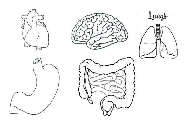 Manualidadesconmishijas: El sistema respiratorio y digestivo para infantil - moldes