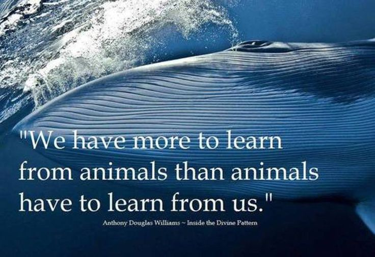 10 inspiring quotes about animals