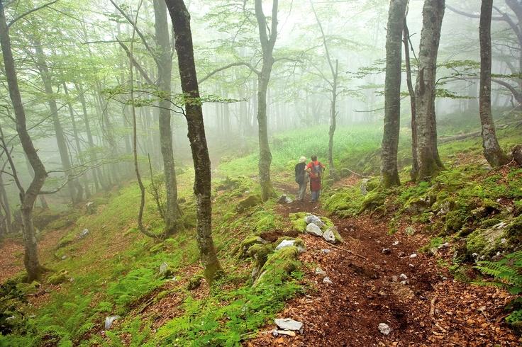 Ruta del Gumial, bosque del municipio de #Aller #Asturias España // Gumial Route, forest of #Aller council #Asturias #Spain