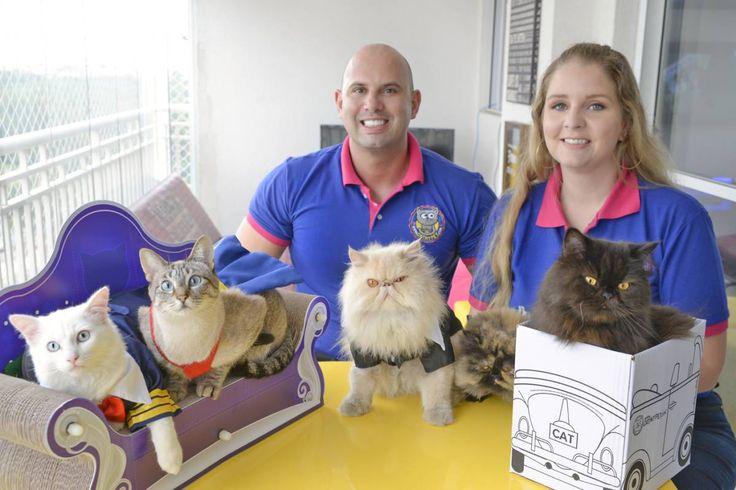 Após uma demissão, o casal Agnes e Diogo, donos de cinco gatos, resolveram criar produtos para os animais ao observar uma carência de itens no mercado