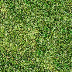 A grama são carlos é uma planta rasteira alcançando altura de 10-20 cm. suas folhas são lisas, perenes e lineares. possui formação densa e o tom de verde muito ornamental, essa grama se adapta a locais de meia sombra ou a sol pleno. tolera também locais úmidos e frios.
