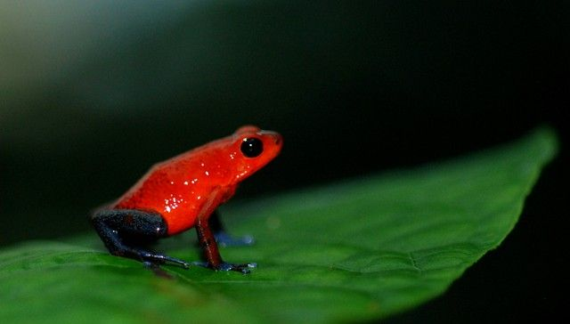 Wonderfully Weird Frogs We Need To Protect