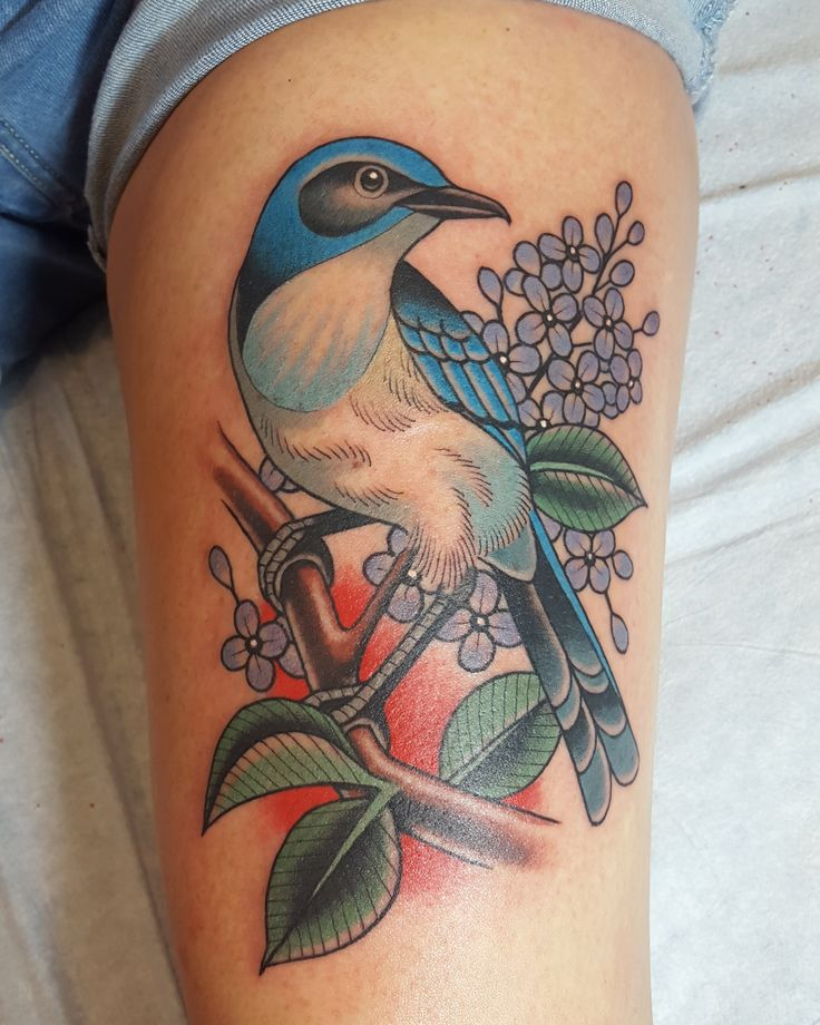California scrub jay and lilacs done by Danny Derrick at San Luis Tattoo Company in San Luis Obispo California