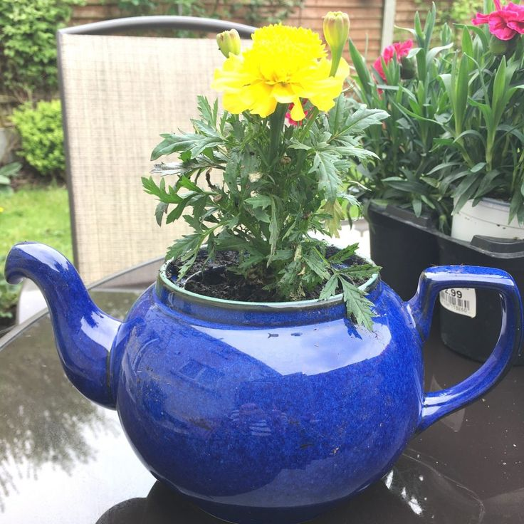 old teapot into planter