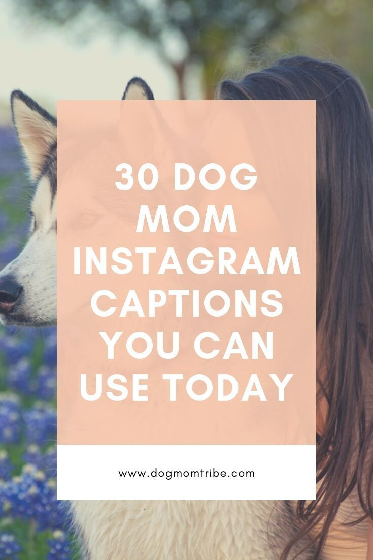 Pin On Dog Mom Quotes