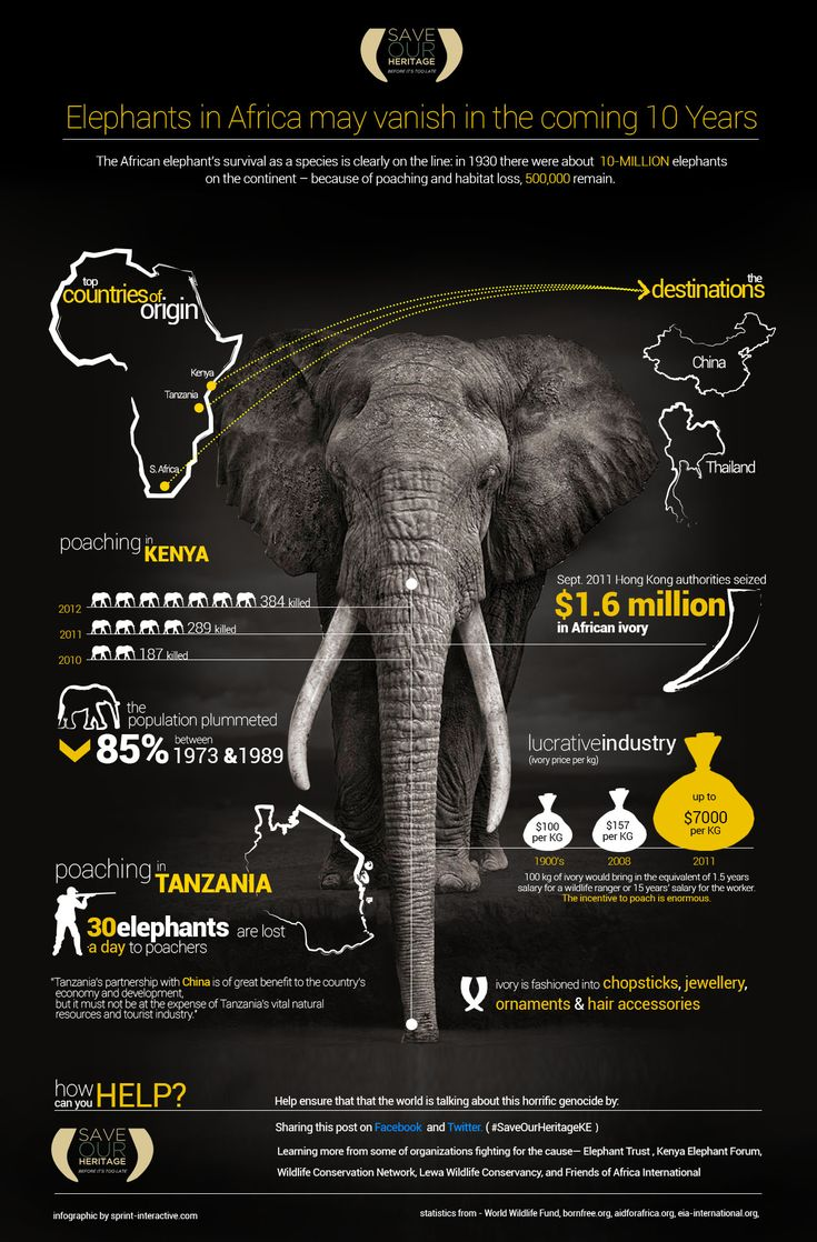 There is an unprecedented massacre on elephants in their last havens... An infographic on the statistics.