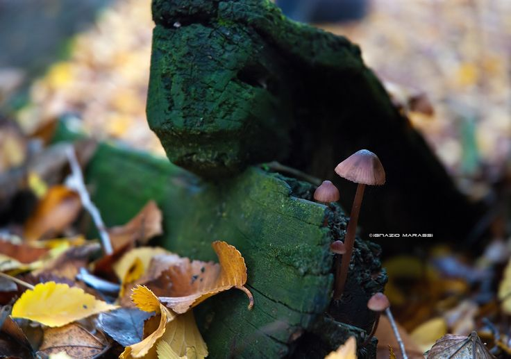 Mushrooms and leaves by Ignazio Marassi on 500px