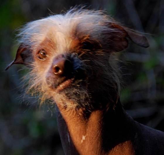 Photos courtesy of the World's Ugliest Dog ® Contest, Sonoma-Marin Fair, Petaluma, California