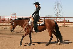 Part 4:AQHA Professional Horsewoman Tina Kaven explains the difference in exercises between her younger horses and her more experienced ones.