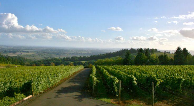 7 luxuriöse geheime Weinregionen | Willamette-Tal, Oregon  Das Geheimnis ist über Oregon Willamette Valley, die 500 Weinkellereien verfügt, aber es bleibt glückselig frei von Menschenmengen. | www.bocadolobo.com
