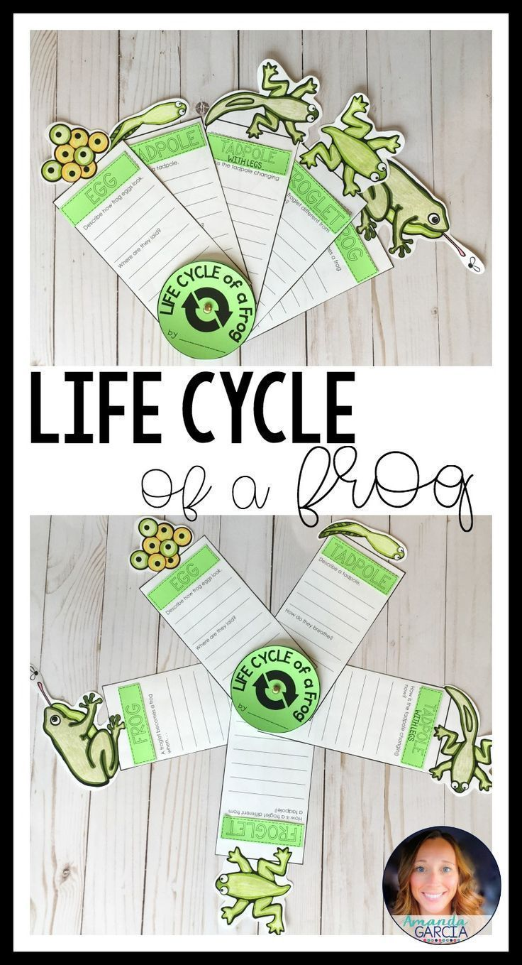 Life Cycle of a Frog: Fact Fan Distance Learning | Life cycles, Frog life  cycle activities, Life cycles activities