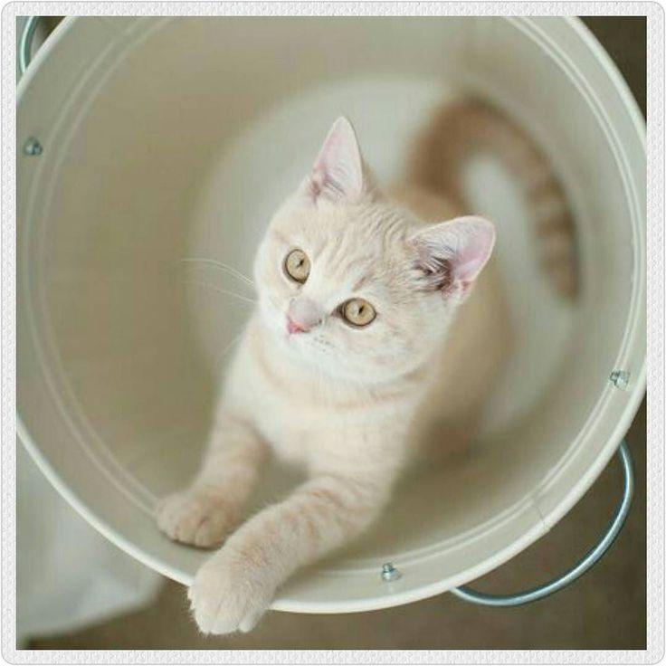 """amorgatuno: """"El juego ayuda a los gatunos a ser más confiados. Los gatitos aprenden a relacionarse con sus hermanos y otros gatos a través del juego es parte de su educación social. Ayuda a tu gatito a continuar este proceso jugando con él a diario combinándolo con sesiones de mimos así se acostumbrará al contacto humano será menos tímido desconfiado y huidizo de las visitas. #amorgatuno #mundogatuno #gato #gatos #amordegato #gatostagram #gatosdeinstagram #gatito #gatitos #gatico #kitten…"""