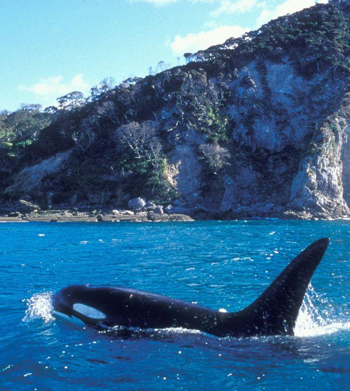 ORCA _36.jpg (710×793)