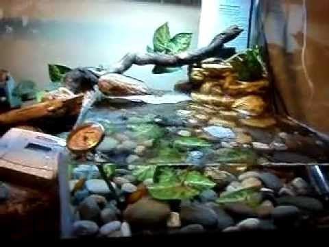 Red Eyed Crocodile Skink Terrarium Setup - YouTube | For ...