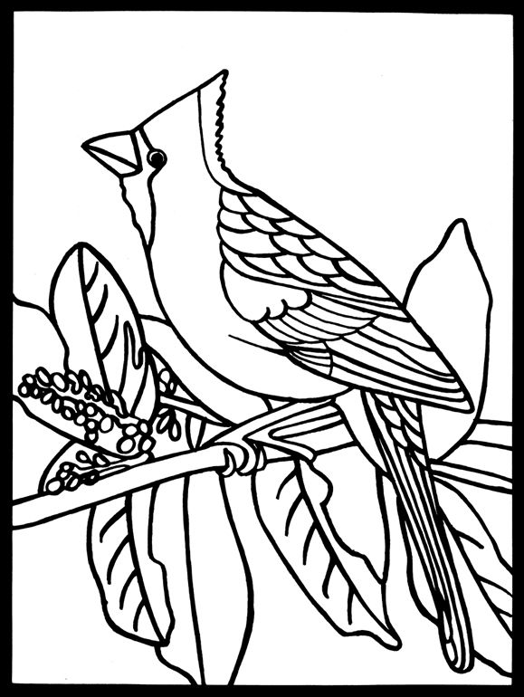 Cardinal Bird Coloring Pages Adult Coloring Coloring Pages