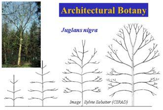 Architectural Botany