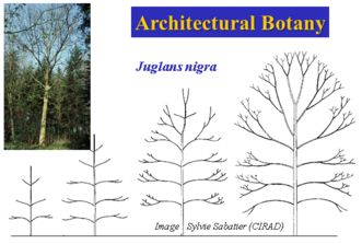 Architectural Botany