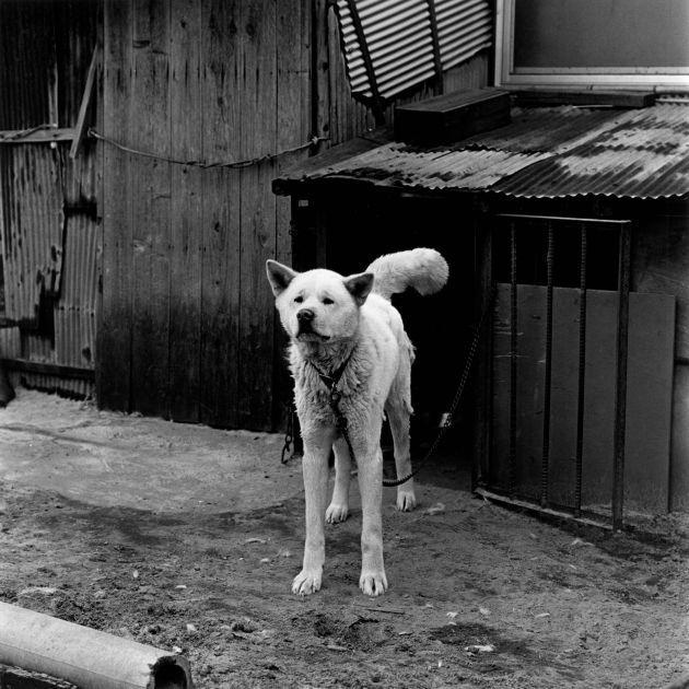 Tomari-son, Tottori (1978) by Issei Suda