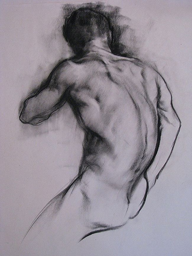 Cefx - male posterior back charcoal anatomy drawing <3