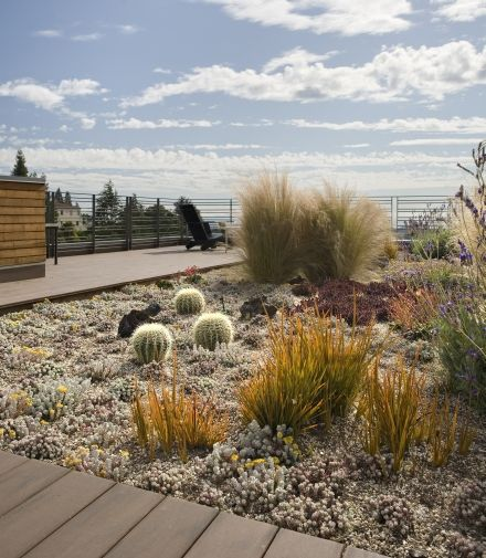 If you don't want a green graden, this could be am option: desert-look at your rooftop. Margarido House, Green roof