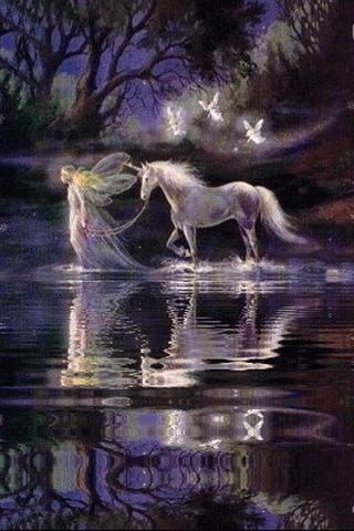 Unicorn & Fairies