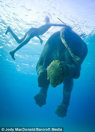 RAJAN The elephant spends time foraging in the jungle and swimming in the sea with his mahout